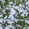 Sneeuwmachine sneeuw huren - Partytentverhuur Assen